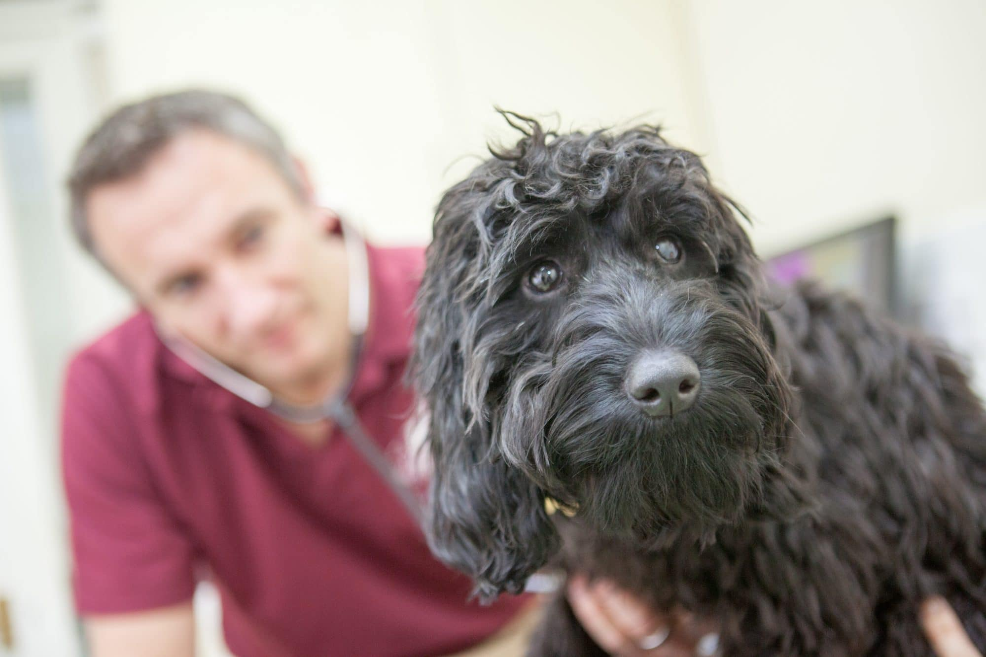 Henley Hosue Vets, Uckfield