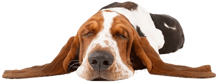 Henley House Vets - Advice and Resources
