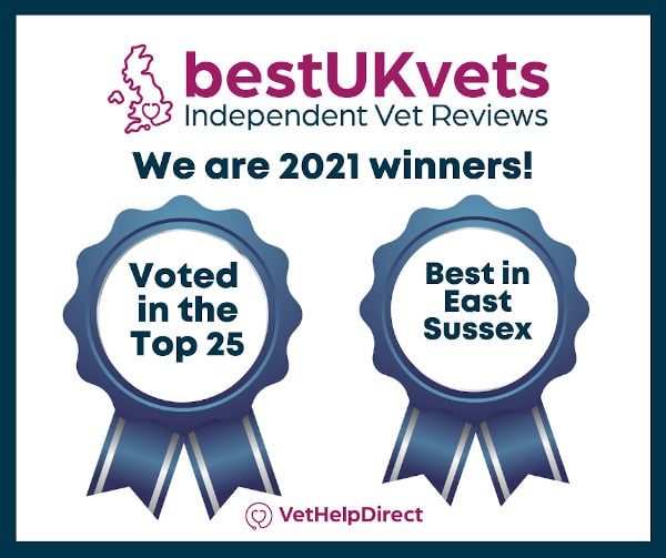 Best Vet in East Sussex - Best UK Vets 2021 Awards